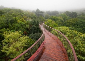 The-Boomslang-canopy-walkway_3